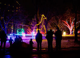 Denver Zoo's Zoo Lights